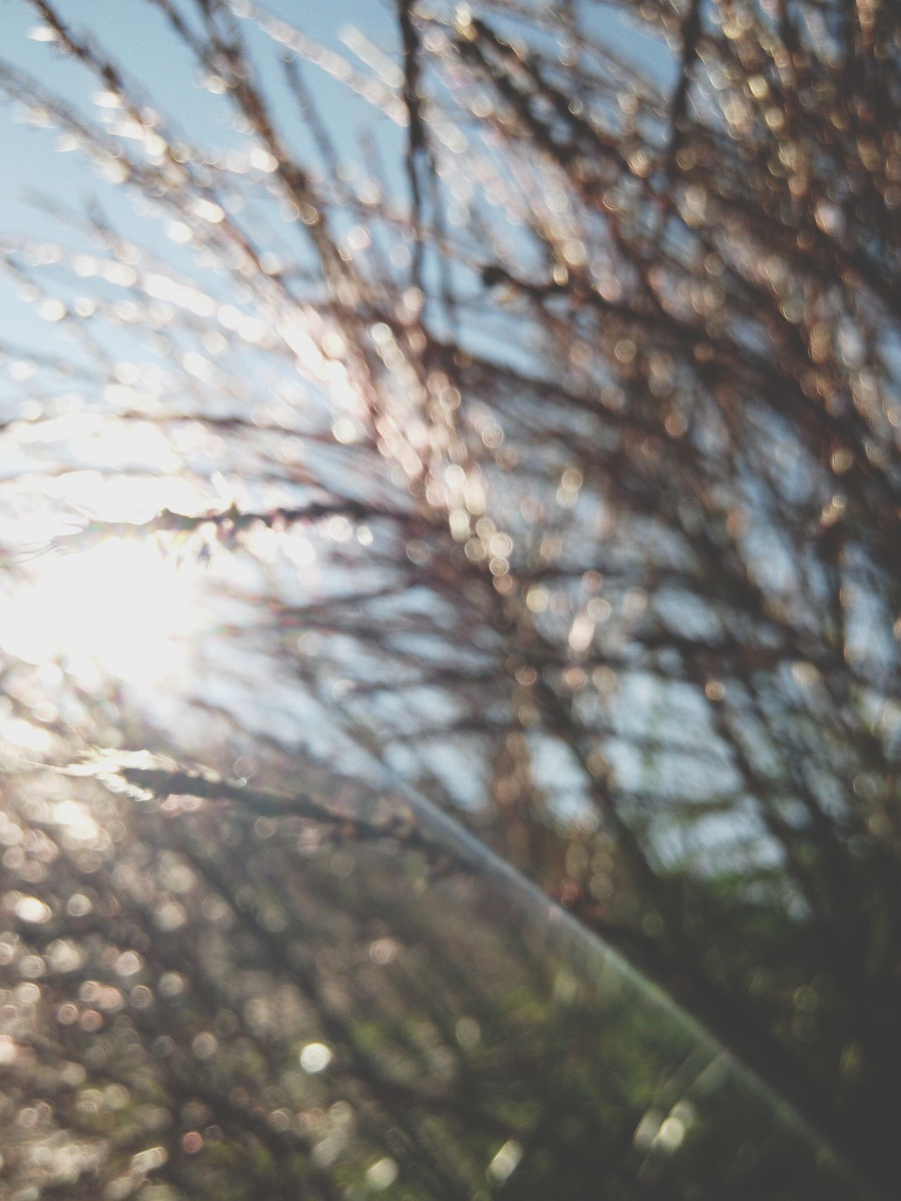Miscanthus Grass Flowers Blur Bokeh Nature Shades Sun Glare Abstract Pattern Backgrounds