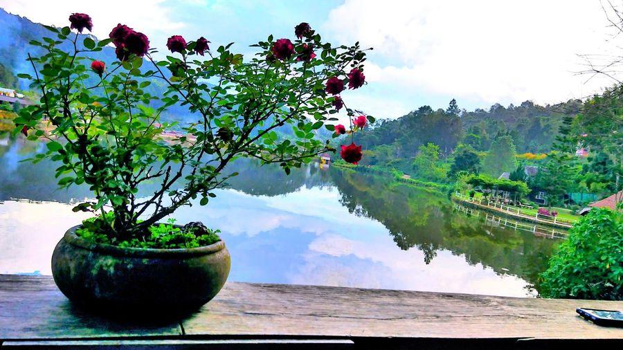 motorcycle trip at ban rak thai Holiday Vacation Rosé Flower Reflection Colorful Mountain Landscape Sky Water Lake Hill Nature Outdoor Ban Rak Thai Village Maehongson Thailand Sony Xperia Xz