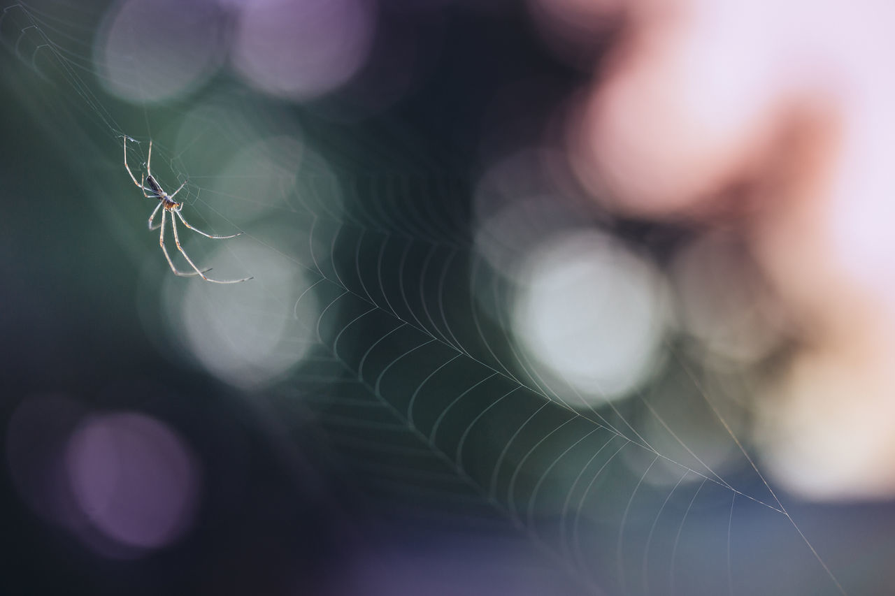 spider web, spider, close-up, focus on foreground, selective focus, web, outdoors, nature, no people, day, fragility, beauty in nature, animal themes