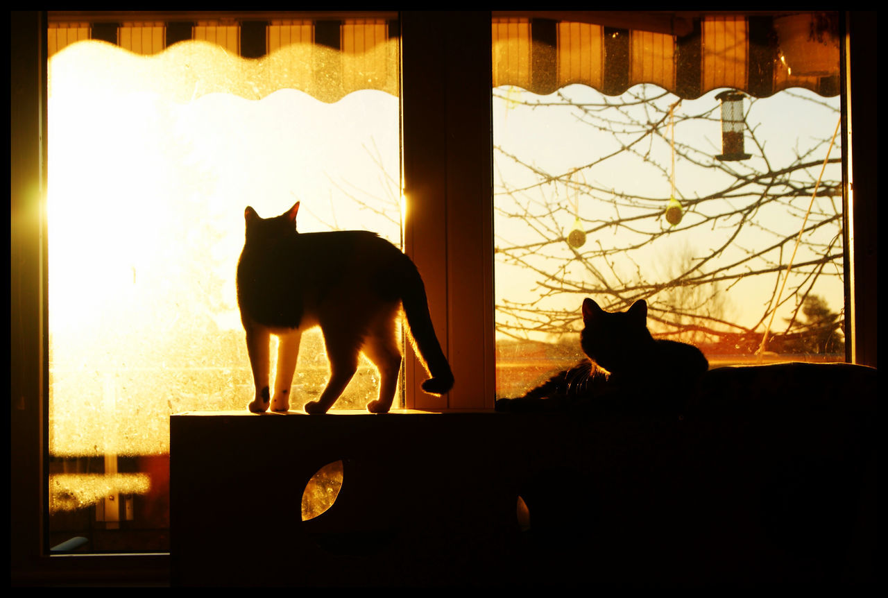 Silhouette Cats At Window Sill In Home