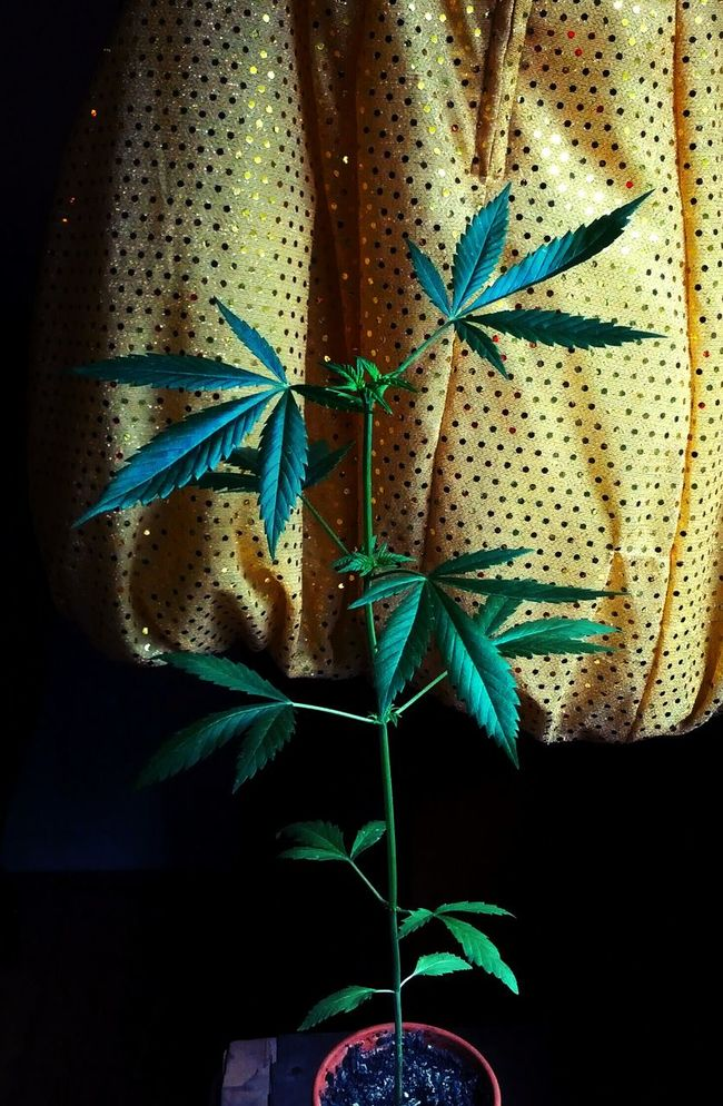 Grow Slow Growing Plants Never Grow Up