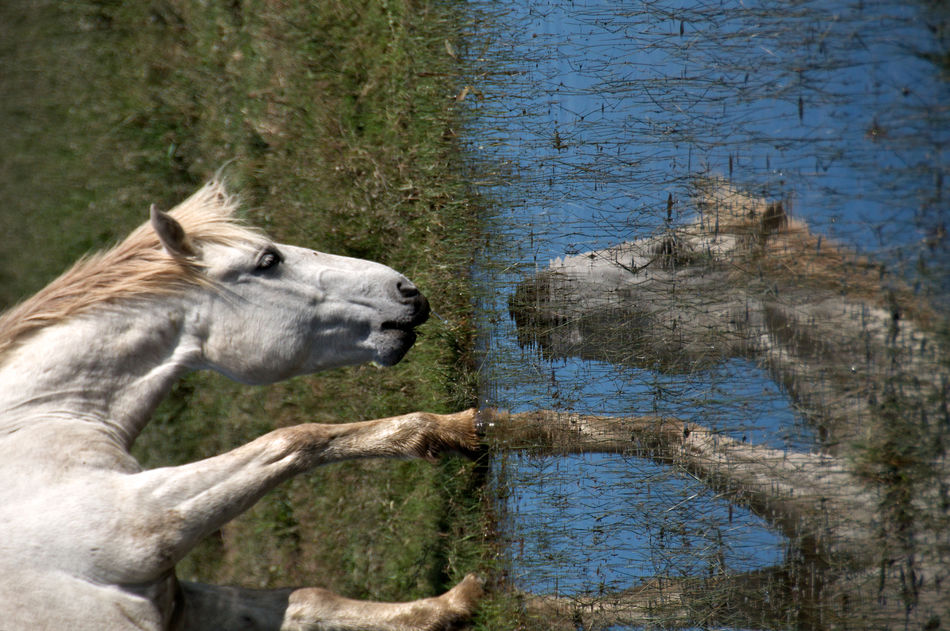 reflection of humanity Animal Themes Beauty In Nature Close-up Domestic Animals Horse HUMANITY Nature Nature Landscape No People Outdoors Reflection Reflections In The Water Relaxing EyeEmNewHere The Week On Eyem Creativity Art Is Everywhere