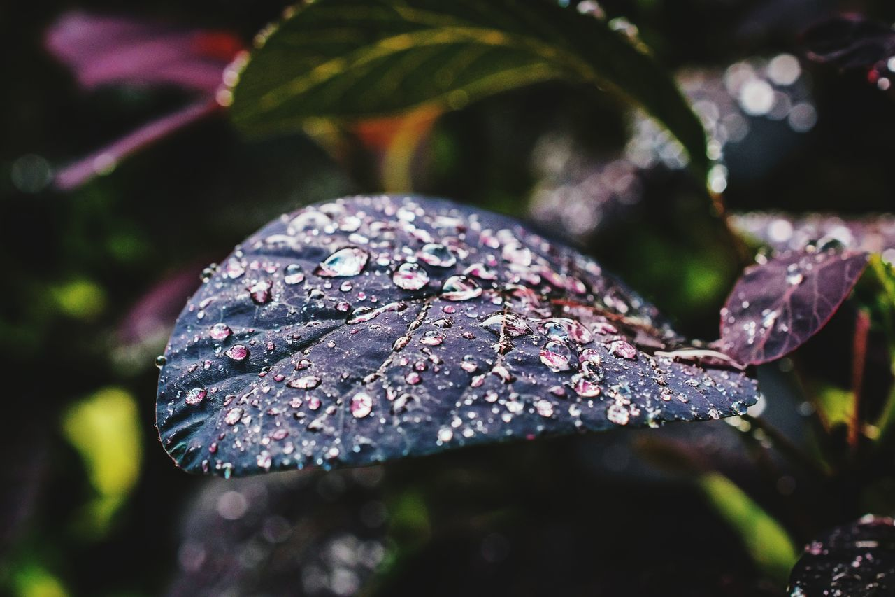 leaf, drop, close-up, water, nature, day, no people, wet, outdoors, raindrop, fragility, beauty in nature, freshness