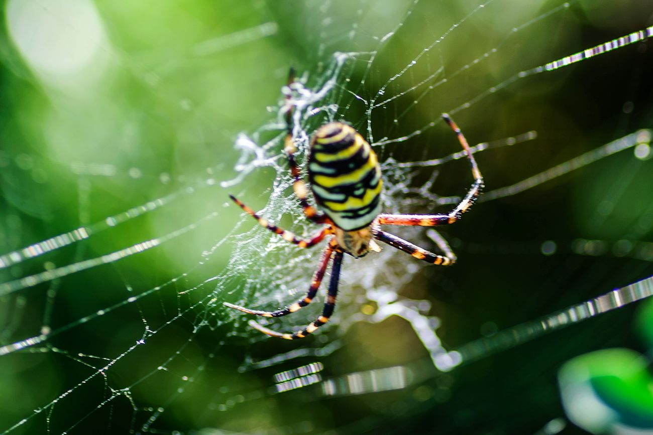 Spider Web Spider Animal Themes Animals In The Wild One Animal Insect Wildlife Close-up Focus On Foreground Spinning Survival Nature Web Day Zoology Outdoors Fragility Beauty In Nature Spiderweb Complexity Macro Eye Em Nature Lover Extreme Close-up Spider