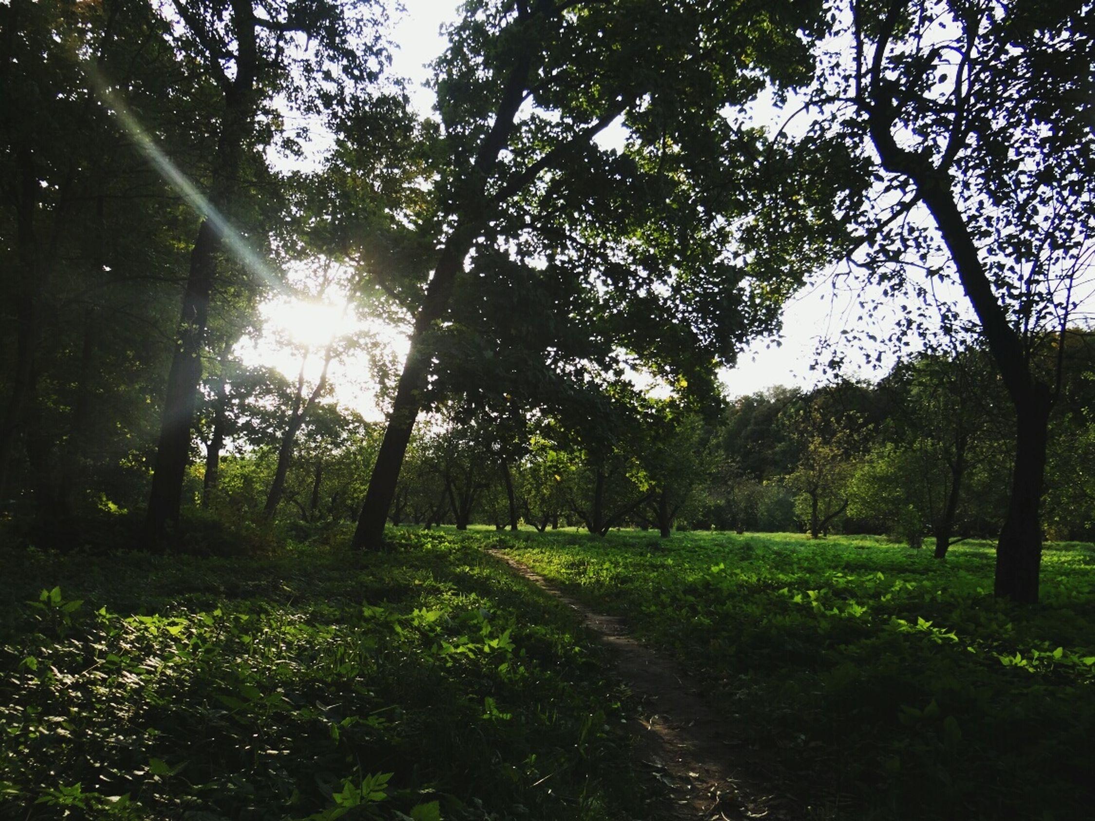 солнцестояние Яснаяполяна осень First Eyeem Photo