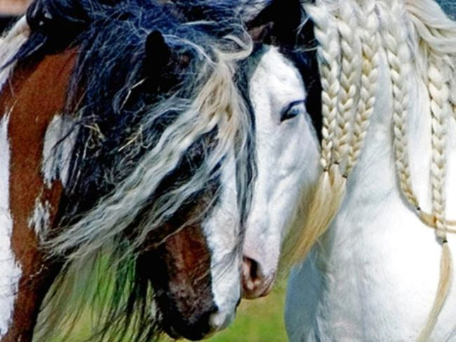 Horse Photography  Animals Animal Photography First Eyeem Photo EyeEmBestPics Izmir/ Bornova Eyeemphotography EyeEm Best Shots EyeEm Gallery