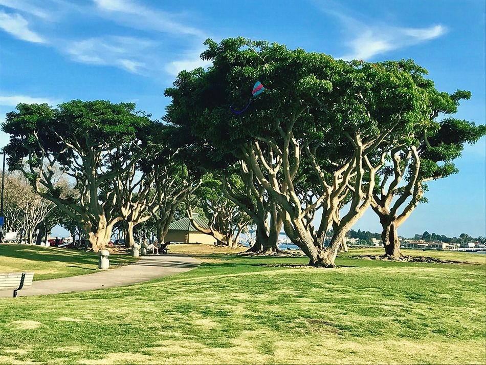 Seaport Village Nature Beauty In Nature Landscape Outdoors No People