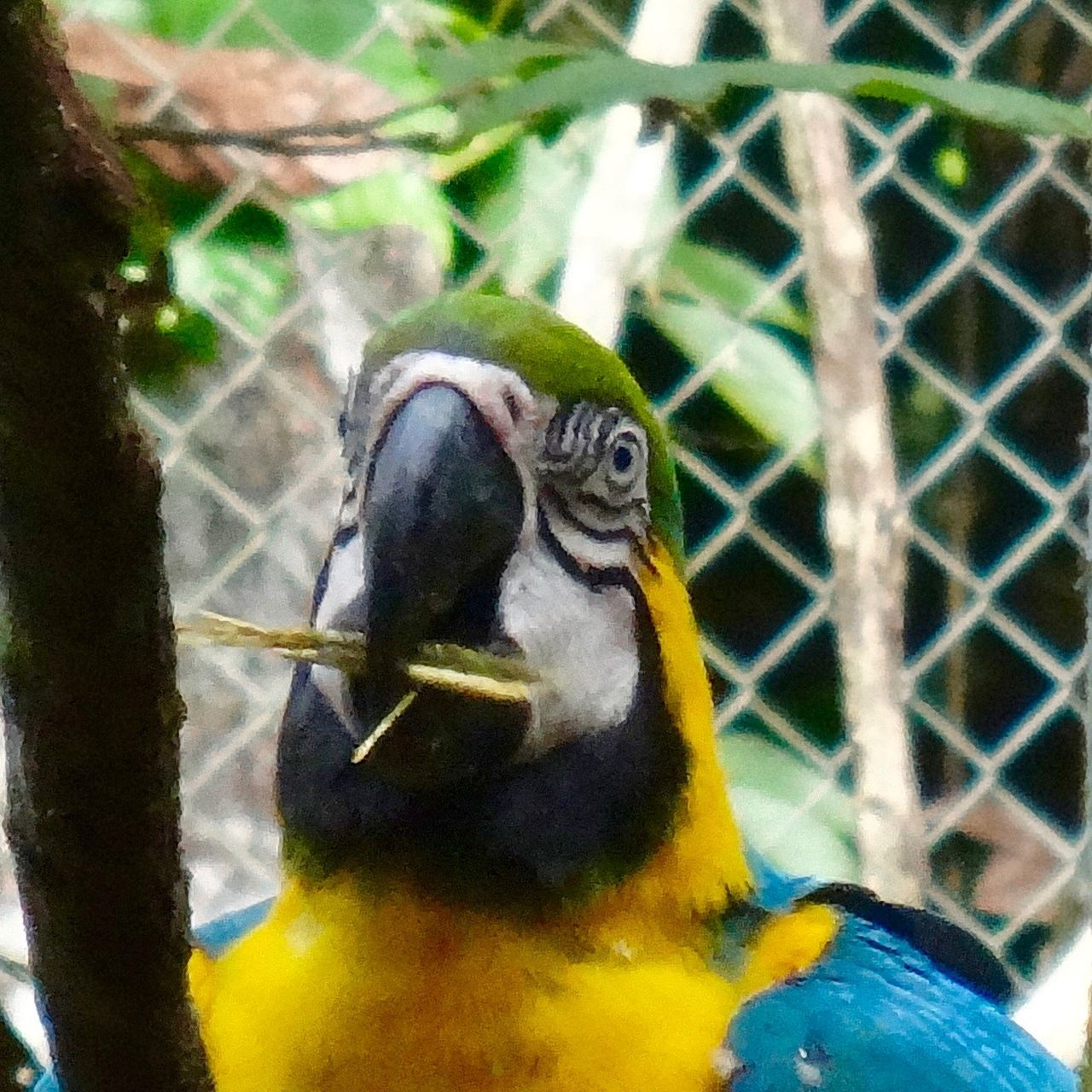 animal themes, animals in the wild, one animal, bird, parrot, focus on foreground, gold and blue macaw, animal wildlife, macaw, day, no people, close-up, perching, nature, beauty in nature, outdoors