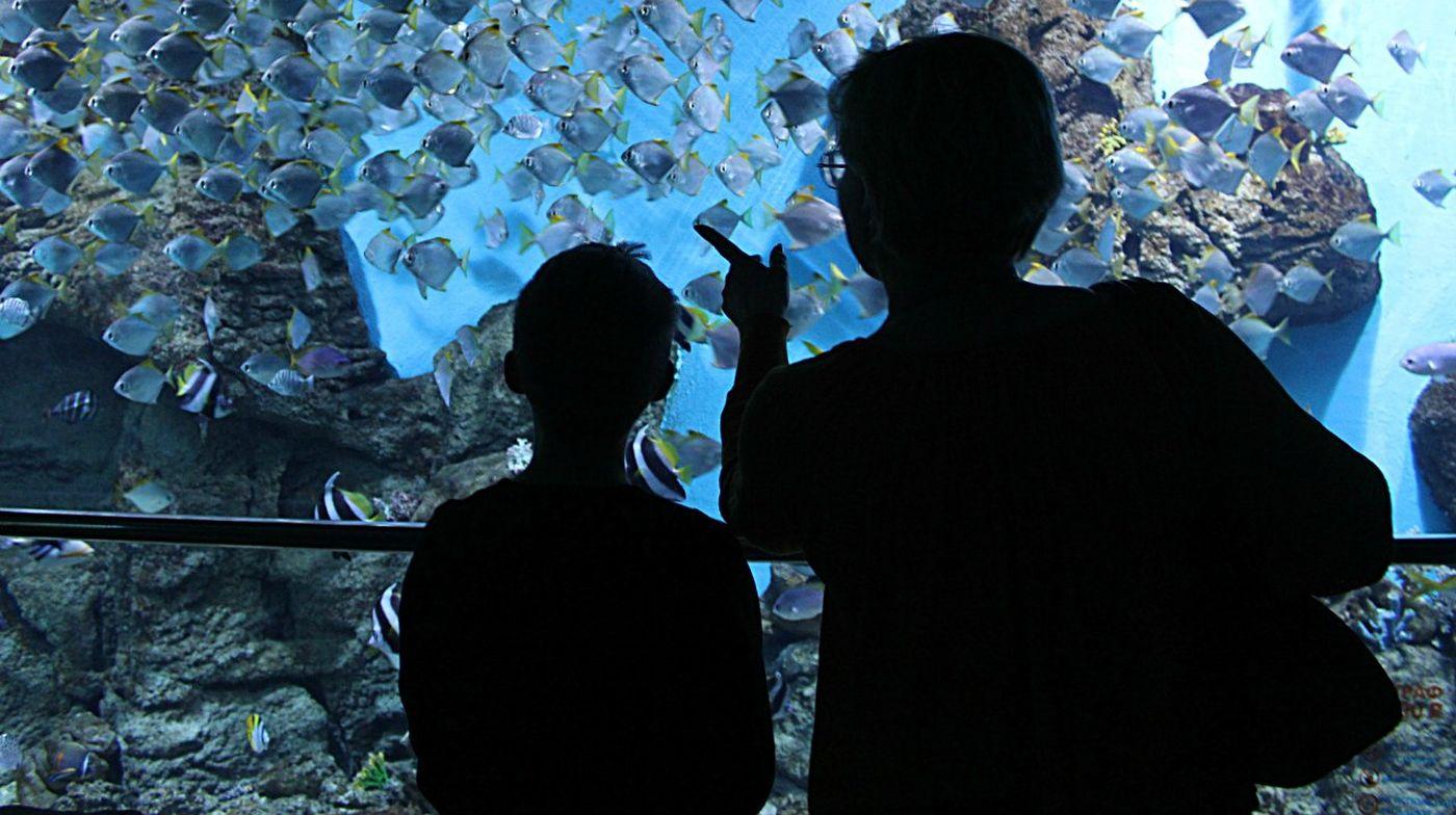 семья рыбы океанариум смотрим