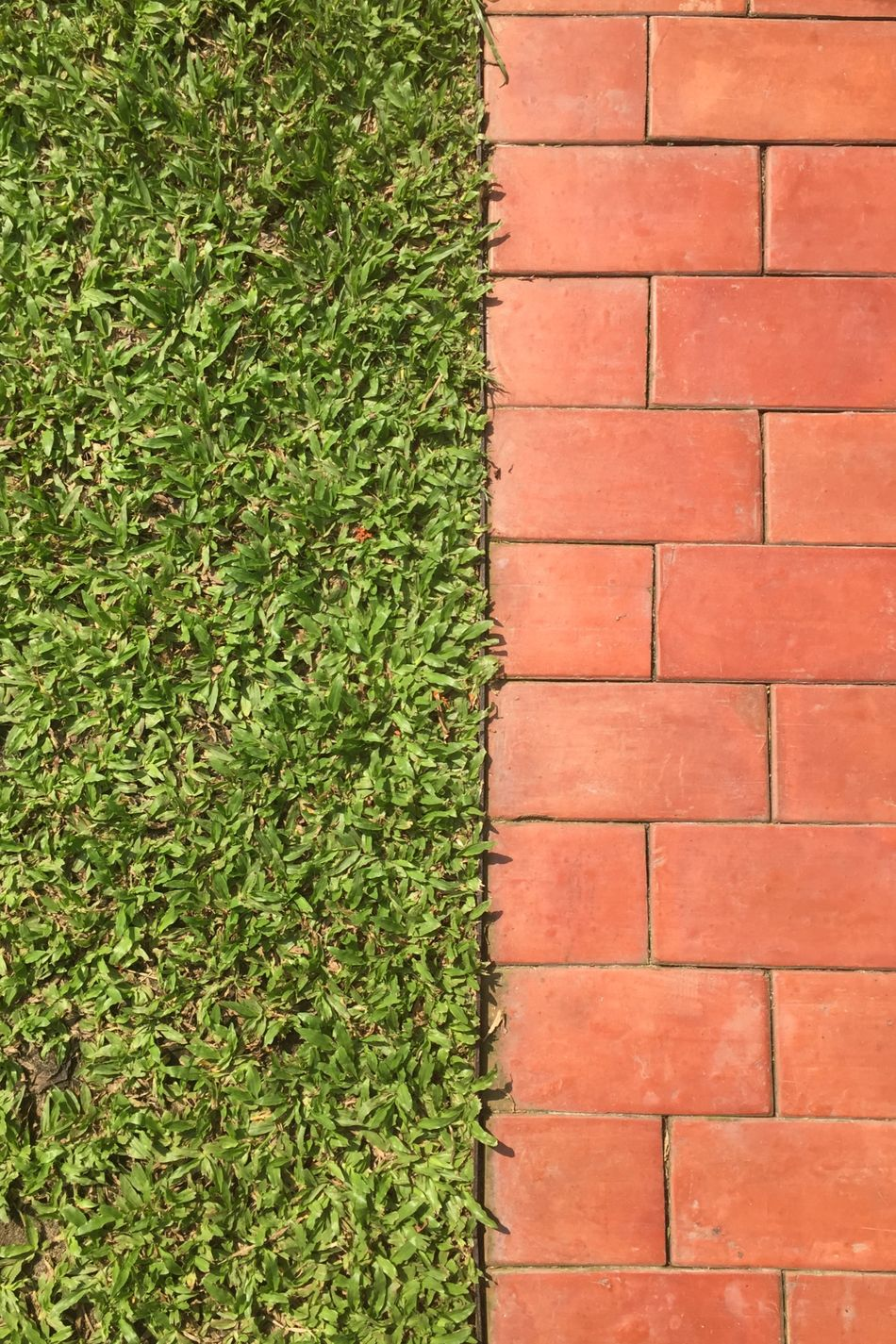 Beautiful stock photos of floor, Close-Up, Grass, Green, High Angle View
