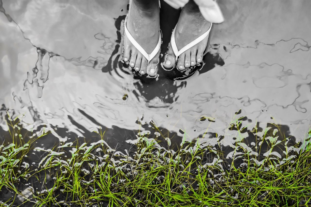 water, high angle view, outdoors, nature, day, low section, real people, one person, close-up