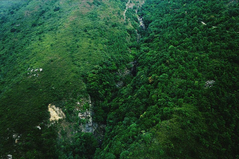 Beautiful stock photos of green, Aerial View, Day, Forest, Full Frame