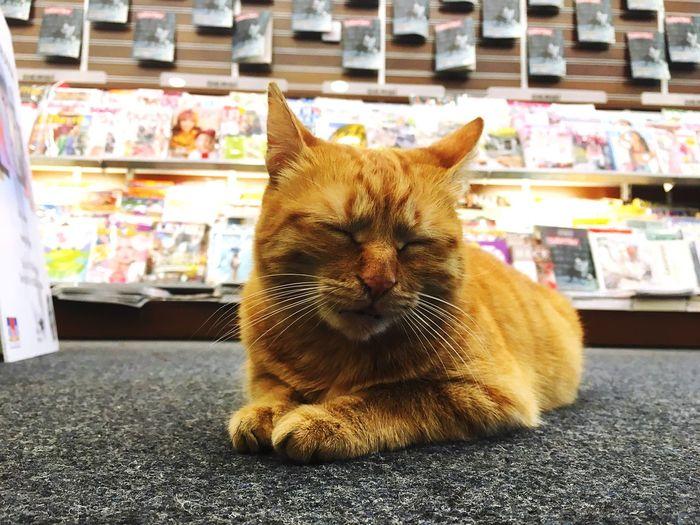 Cat Kedi Bookstore Kitapçı D&R