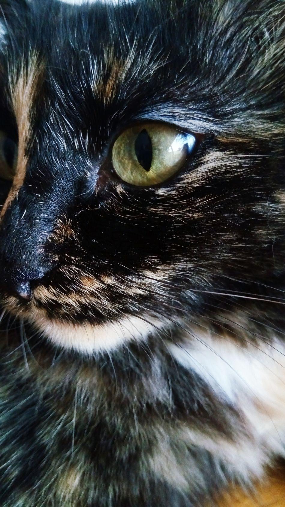 Cat, 2. Cat Cateyes