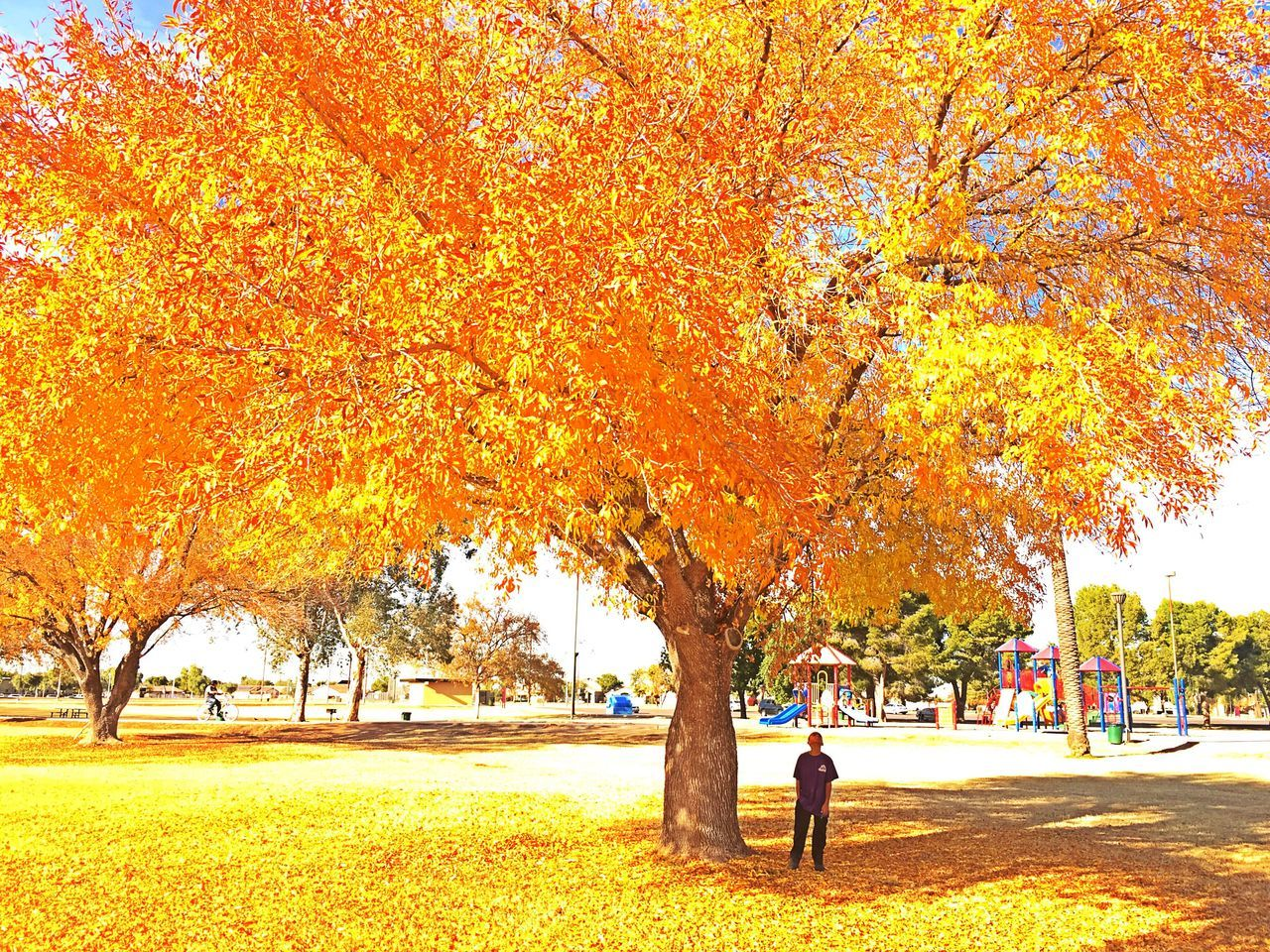 autumn, change, tree, leaf, orange color, nature, real people, beauty in nature, park - man made space, full length, leisure activity, outdoors, tree trunk, day, growth, lifestyles, maple tree, men, scenics, standing, maple, one person, filming, adult, people
