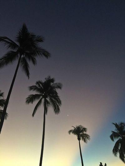 Brazilian Aurora Borealis Sunset Rota Dos Coqueiros Northeast Of Brazil Beach In Recife Beautiful Palms Beautiful Nature Simple Moment