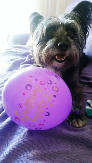 Monello Domestic Animals Pets Dog My Dog
