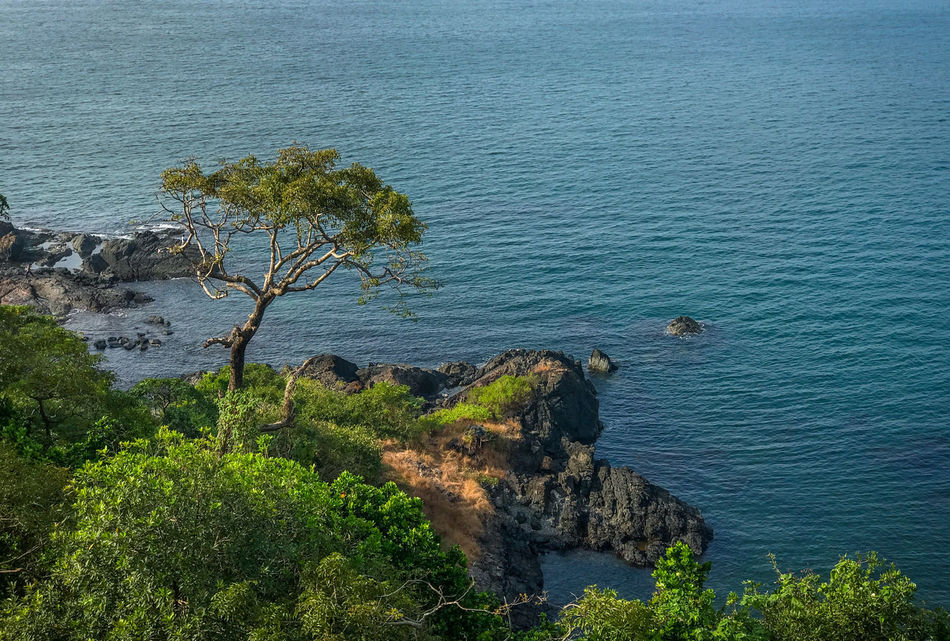 Beautiful view from Cabo de Rama fort. A tree standing tall on the rocks. Beautiful Beautiful Nature Bliss Blue Water Cabo De Rama Day Fort Goa Green Greenery Nature Outdoors Peaceful Rocks Rocks And Water Scenics Sea Tourism Tourist Tourist Destination Tranquility Travel Travel Destinations Tree Water