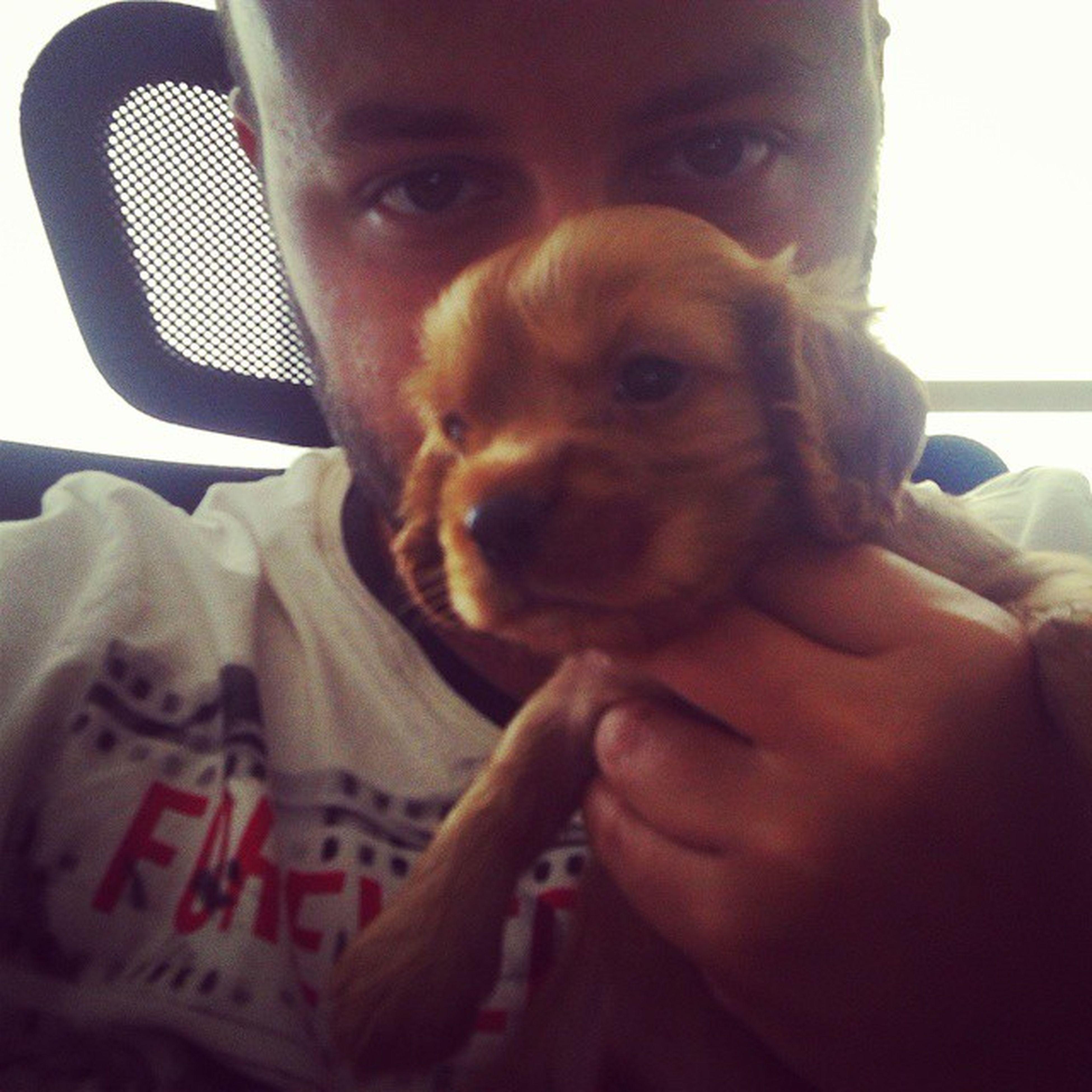 My friend's lovely dog Pasa Puppy Paşa Dog Doggy Snoopdogg Sweet Animal Loveanimals Plushtoy Jeffanimalguy Notatoy