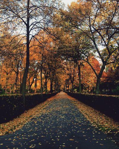 Autumn in Berlin 🍂 Berlin Autumn Wedding Trees Orange Leaves Path Walking Sun Colorful First Eyeem Photo EyeEm Best Shots EyeEm Nature Lover