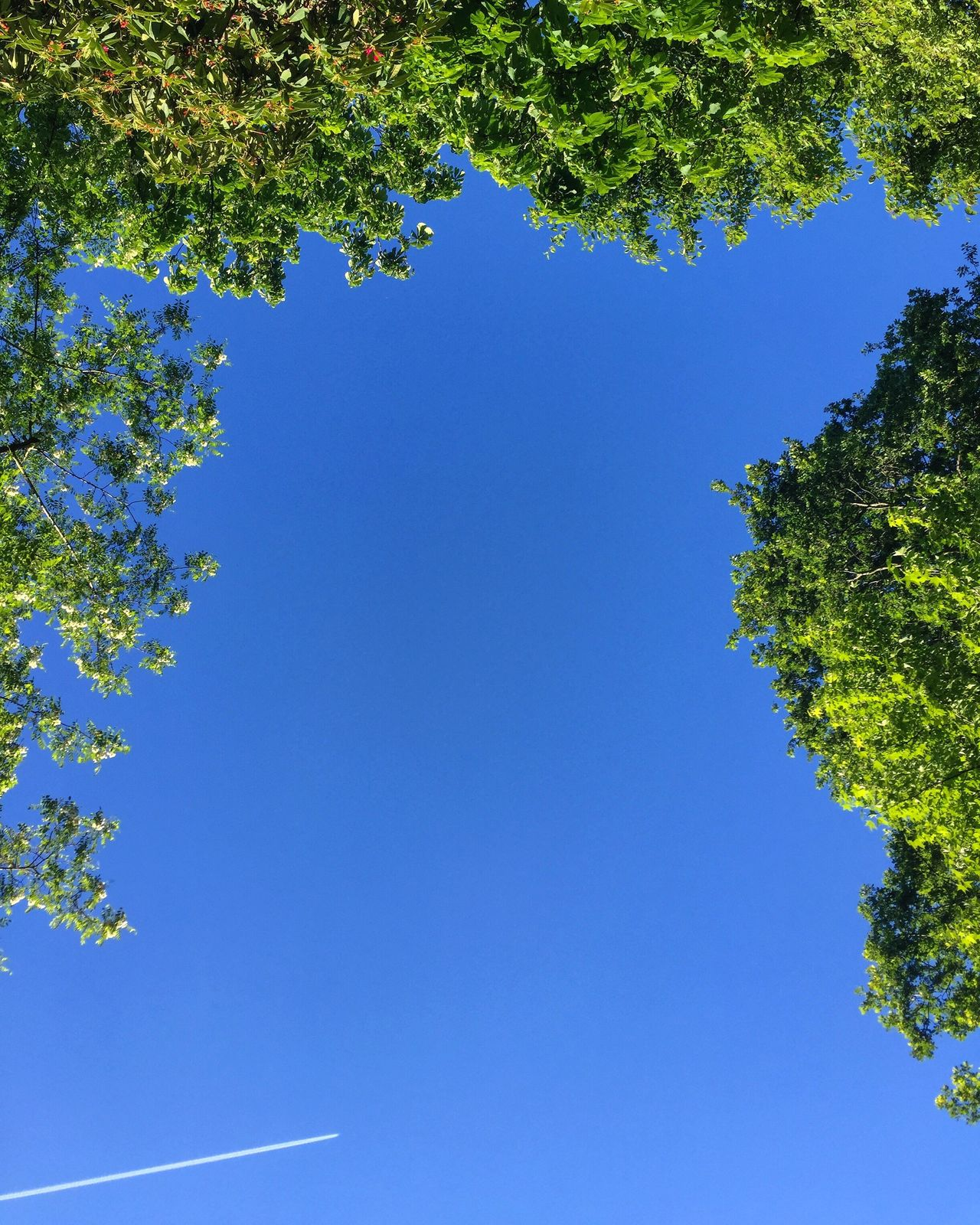 Take a moment and look up Tree Blue Low Angle View Growth Clear Sky Nature Branch No People Day Beauty In Nature Outdoors Sky Freshness The Great Outdoors - 2017 EyeEm Awards