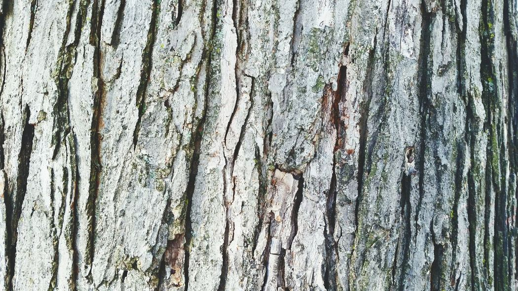 Details 🌳 Backgrounds No People Textured  Wood - Material Close-up Nature Day Outdoors Tree Wood Trunk Wood Pattern Wood Details Close Up Trees Trunk Texture Trunk Pattern Tree Details Trunk Tree Trunk Detail Pattern, Texture, Shape And Form Nature Pattern Nature Patterns Nature Backgrounds Nature Background Tree Pattern EyeEmNewHere