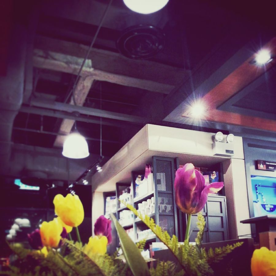 My first photo on instagram , so this too will be my first photo on EyeEm :) Taking Photos Dr.cafe Flower Tulips