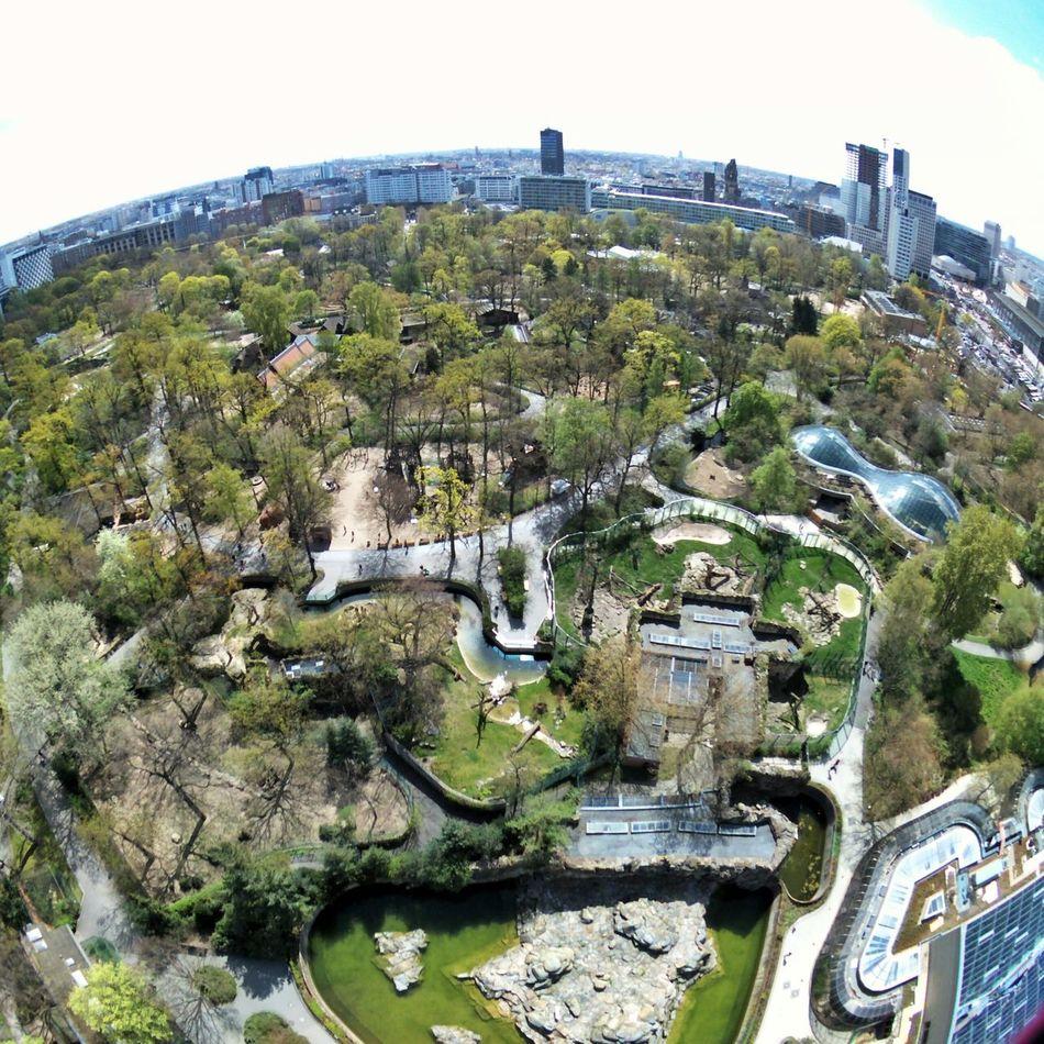 Zoo Von Oben Flying High