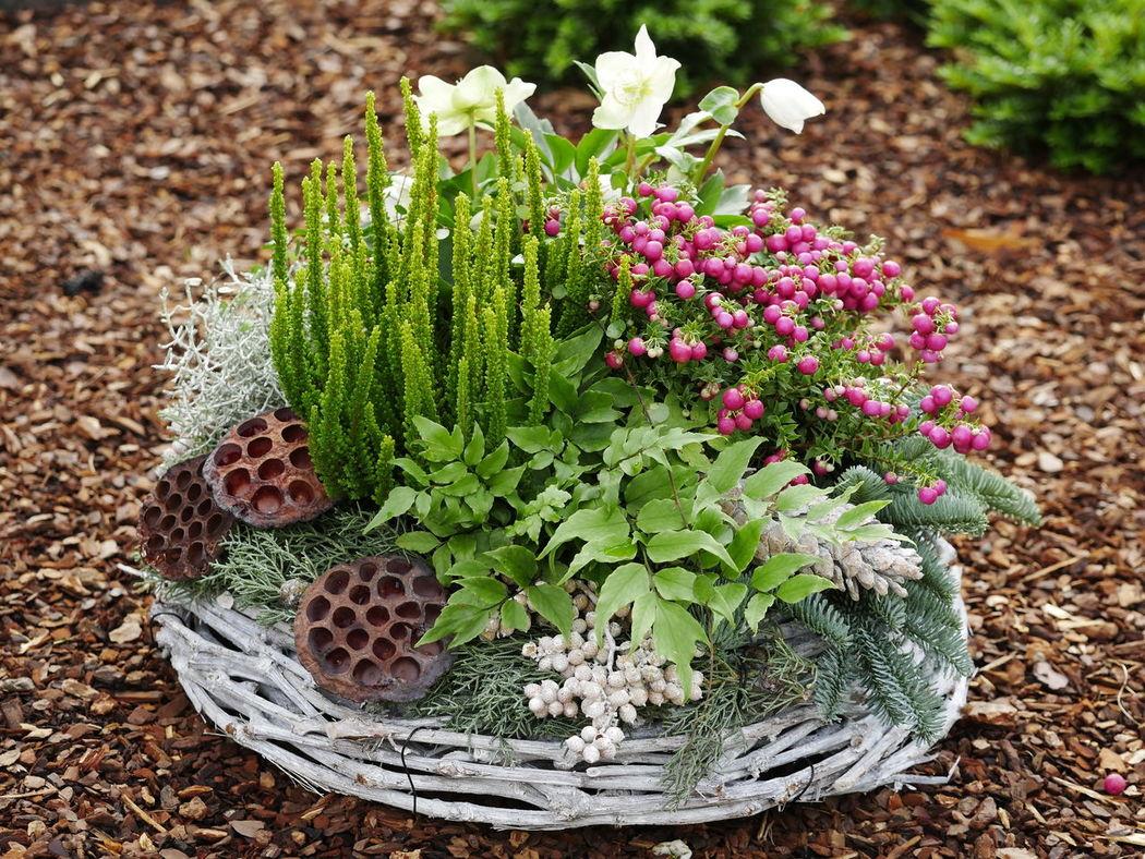 Friedhof Grabschmuck Allerheiligen Beauty In Nature Close-up Day Flower Growth Nature No People Outdoors Plant