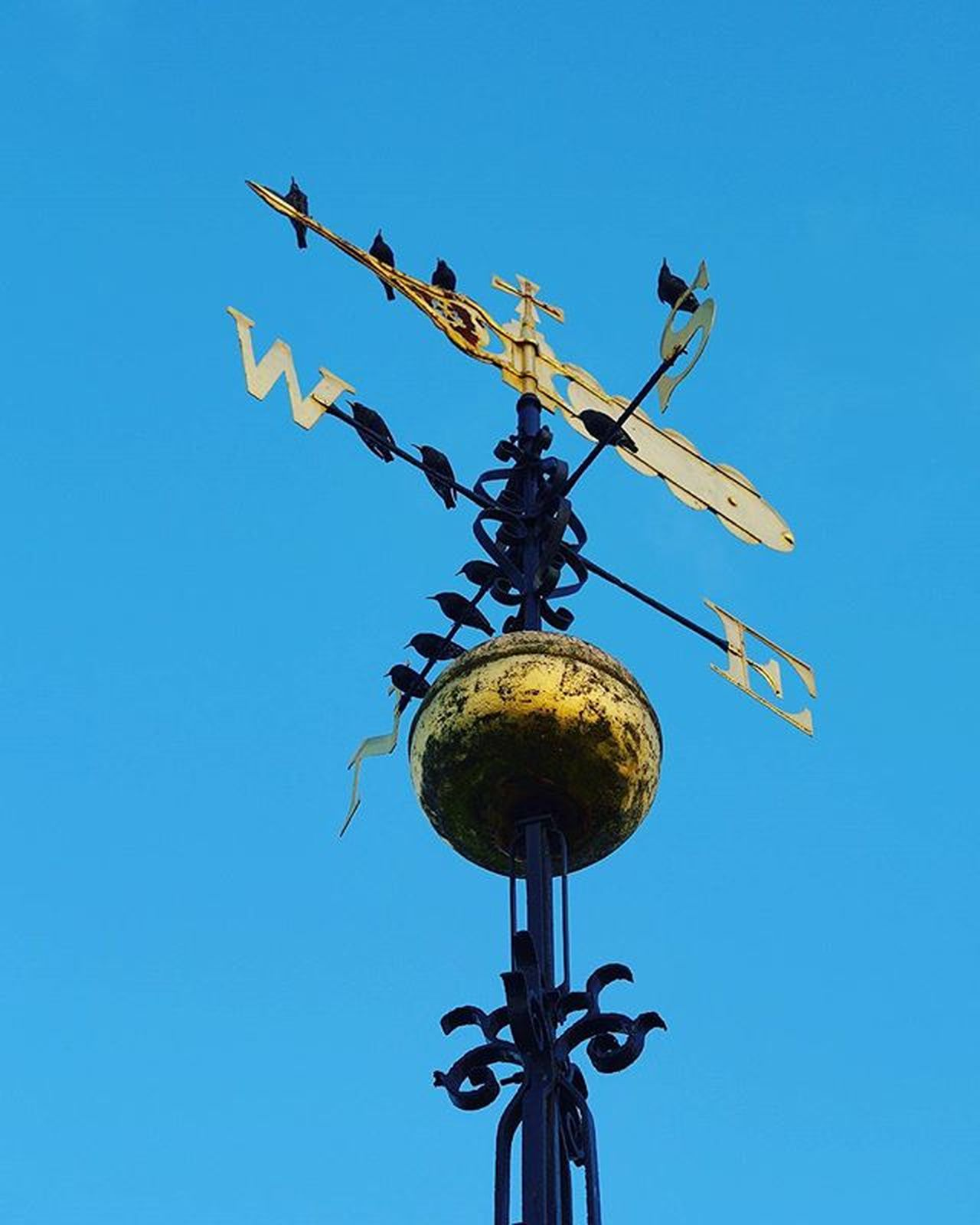 Which way shall we go? Weather vane atop of St Thomas's Church in Stourbridge UK complete with feathered friends . Instagram Bbcmtd POTD Dudley Stourbridge Church Bell Bells Ringing Bellringing Campanology Churchbells Ringers Changeringing Birdsofinstagram Birds Weather Weathervane Weathercock Compass Gold Blue Ironwork  Iron Blackcountry