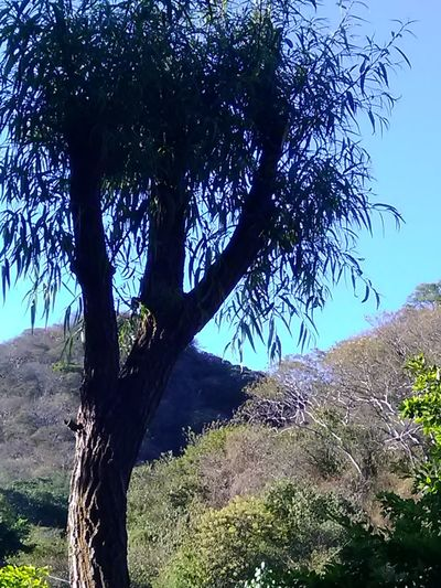 Tree Nature Day Outdoors No People Sky Beauty In Nature Close-up Villa Corona Tree Trunk Branch Tree Area Blue