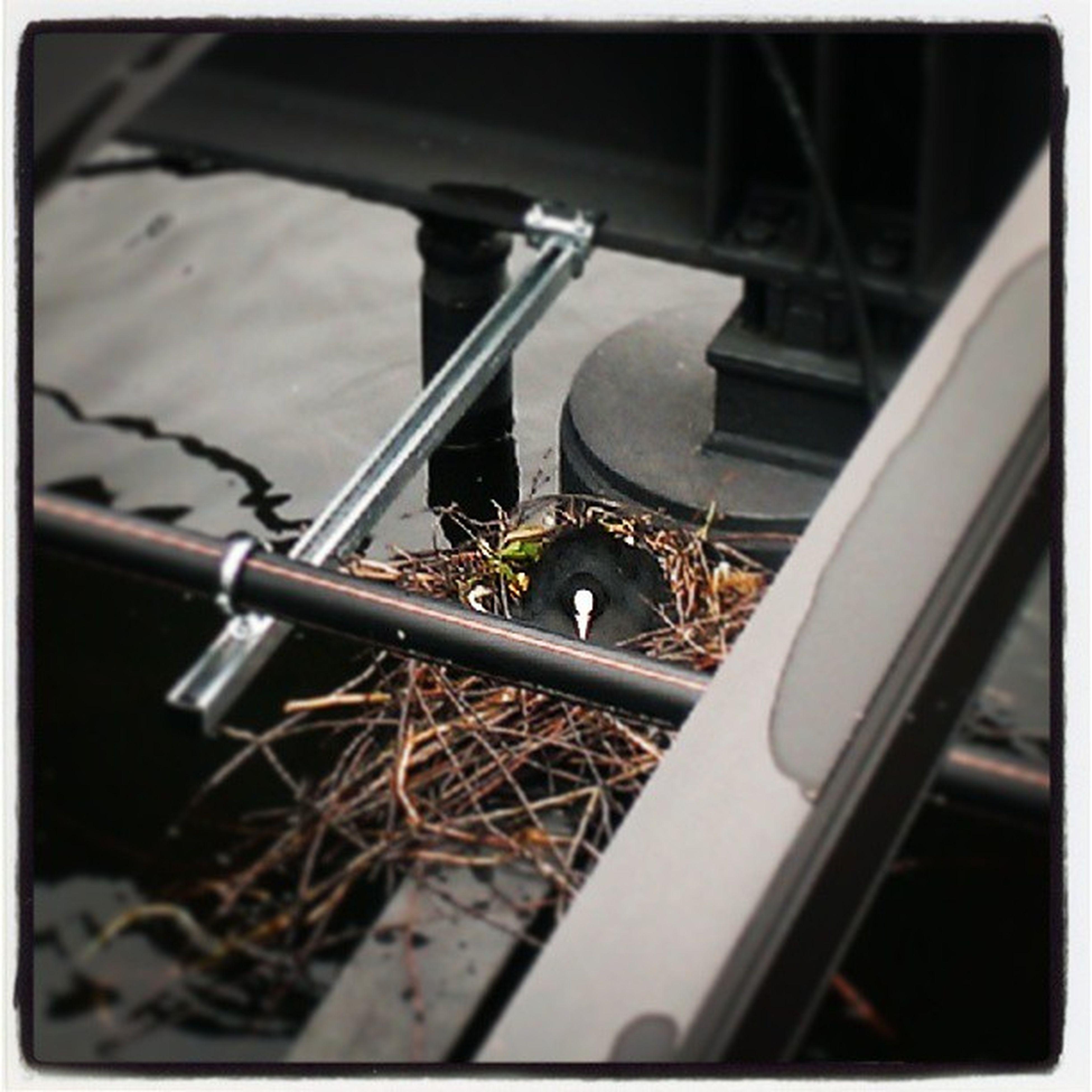Natur erobert Technik. Die Insel darf dank grünem Bürgermeister niemand betreten. Das kümmert das Blesshuhn nicht. Eine Insel wird zur Kinderstube. Und irgendwann dürfen auch die Berliner drauf. Badeninderspree Spree2011 Berlin Xhain dieterundsirosenkranzinsel Vögel Nest trauminsel sauberespree