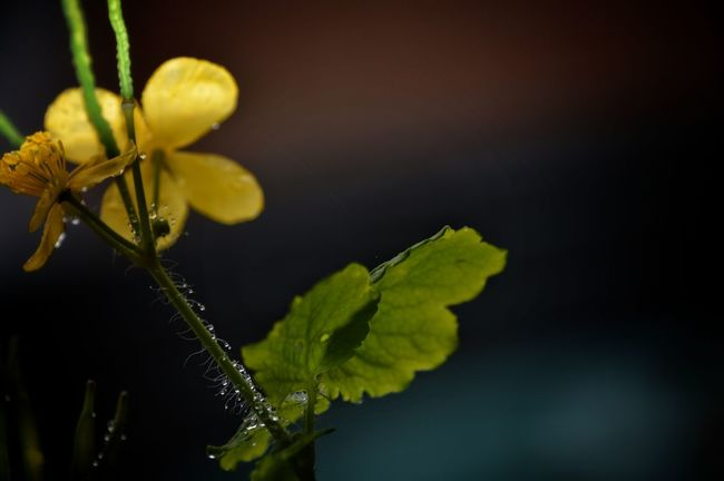 Flower Yellow Beauty In Nature Nature Plant Eyeemphoto Outdoor Beauty Outdoorsphotoshoot Eyeem Photography Focus On Foreground No People From My Point Of View Silence Of Nature Flower Head Petal Season  Stem Fragility Close-up