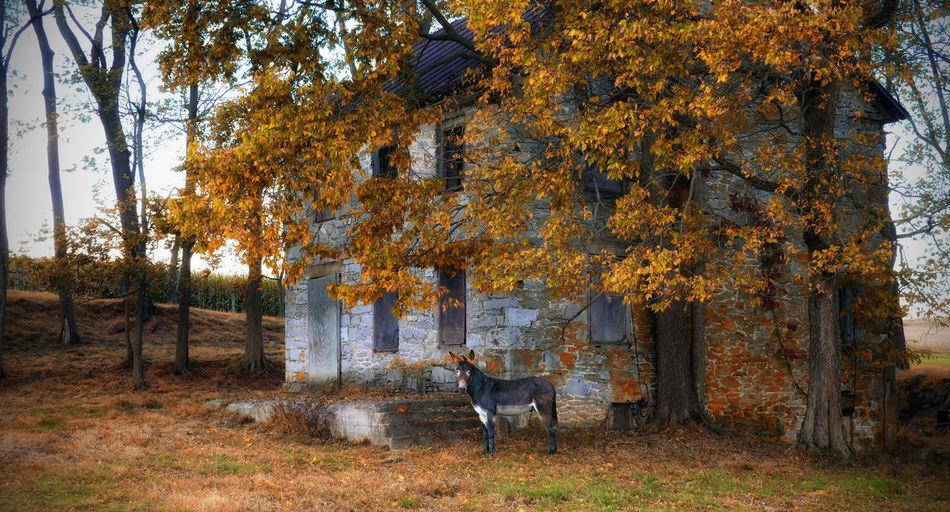 Old Farmhouse Abandoned Animal Themes Domestic Animals Donkey Donkeys Farm Farmette Horse Jaskaran Landscape