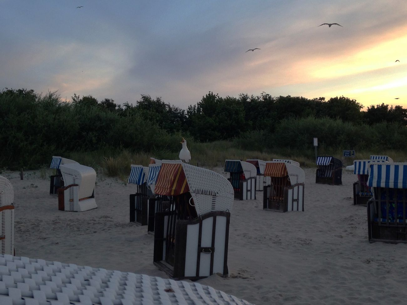 Sky Outdoors Sand Beach Tree Nature No People Animal Themes Day Seagull Ocean Seaside Shore Küste Ostsee Baltic Sea Quiet Moments Meer Vacations Holiday Vogel Sunlight Evening Twilight Dusk