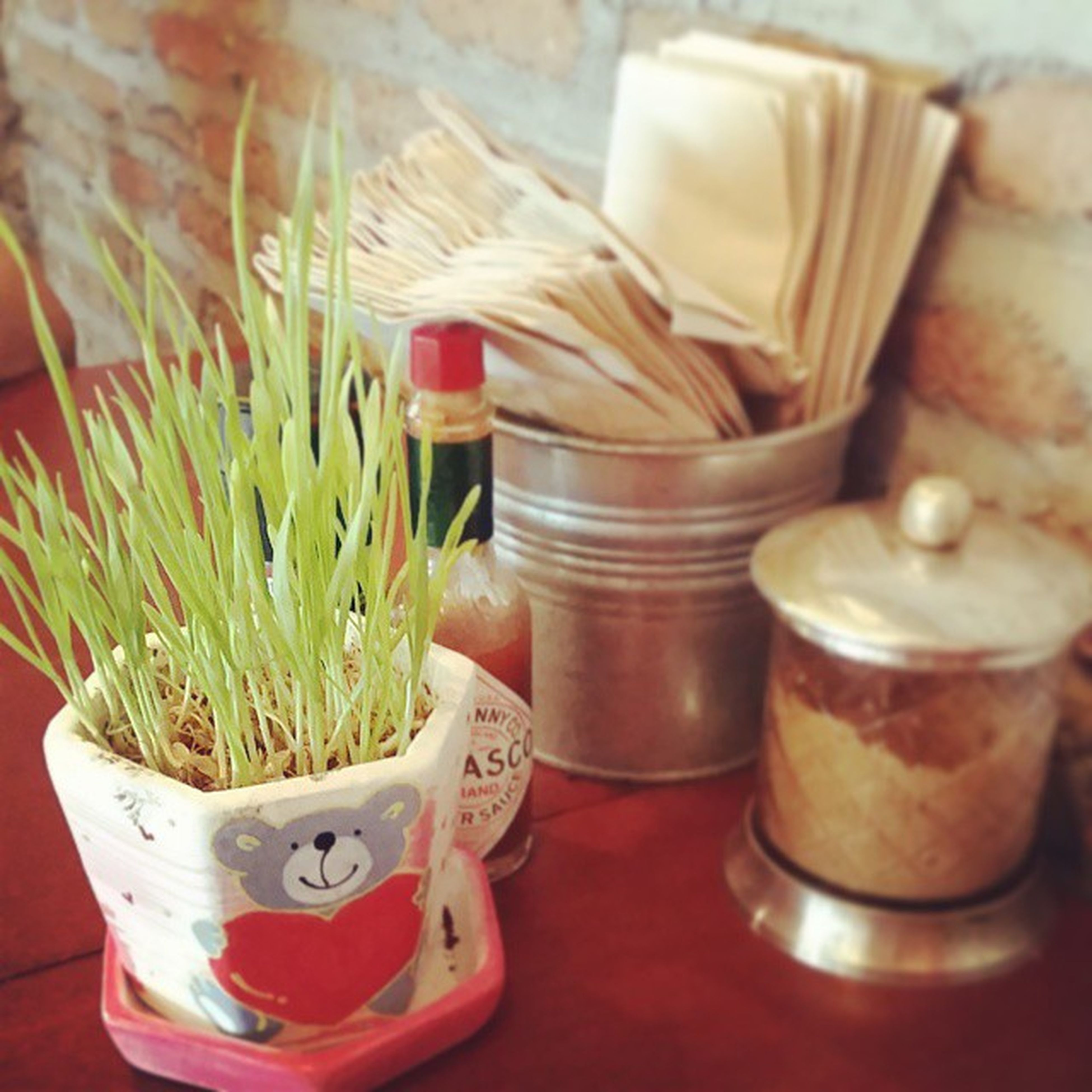 indoors, table, potted plant, still life, plant, container, close-up, no people, freshness, high angle view, growth, bottle, flower, food and drink, day, variation, wood - material, jar, red, arrangement
