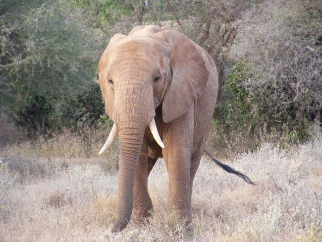 Young Elephant - Saravo - Kenya - Landscapes - Natural Beauty - Out & About With Nature - Nature - EyeEm Nature Lover - Hello World