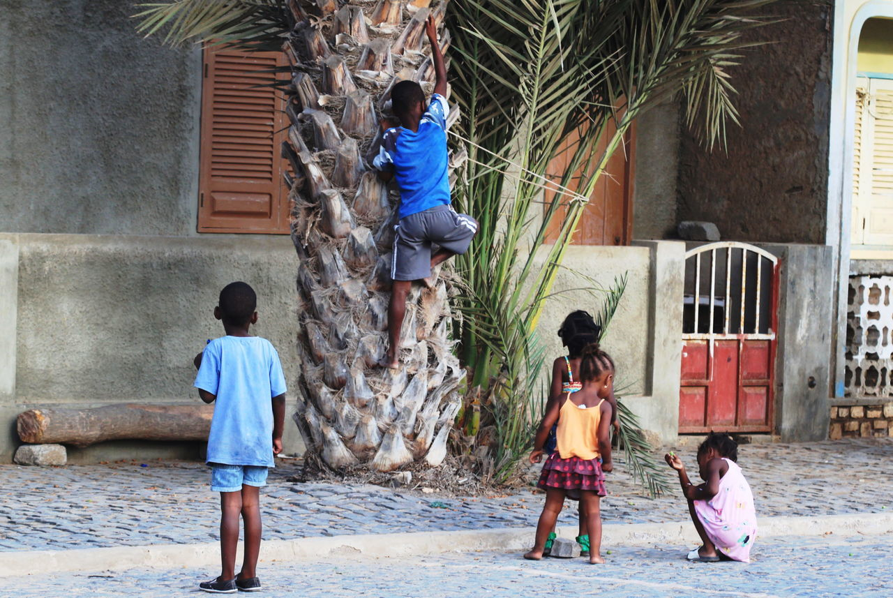 Boys Building Exterior Capo Verde Childhood Climbing Elementary Age Full Length Girls Lifestyles Outdoors Palm Tree Playing Real People Rear View Sal Island Santa Maria Summer 2015