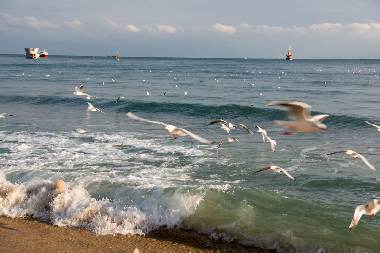 sea, water, nature, bird, animals in the wild, animal themes, motion, sky, beauty in nature, flying, horizon over water, scenics, beach, wave, day, outdoors, large group of animals, mid-air, no people, seagull, spread wings, swan, swimming