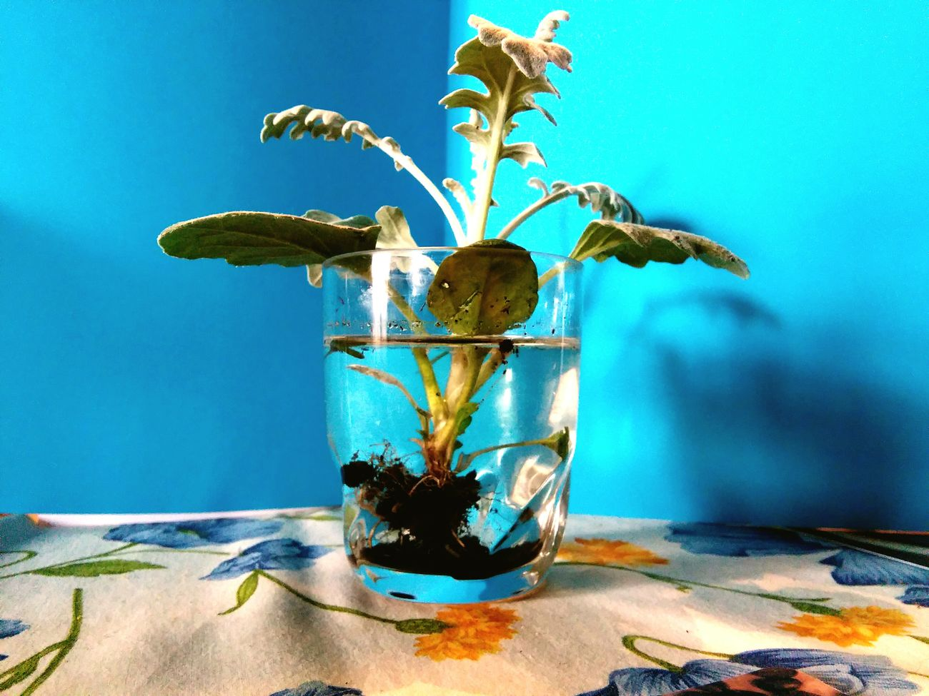 Life 2 Filter Plant Plants 🌱 Second Chance Glass Water