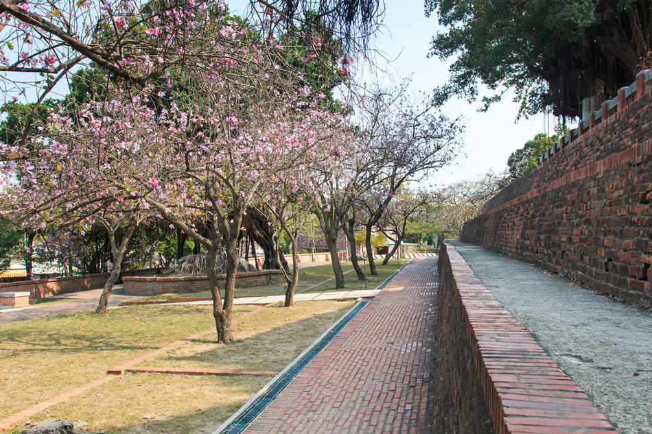 Fort Provintia in Tainan ASIA Beauty In Nature Castles China Day Diminishing Perspective Flower Footpath Fort Provintia Fortress Growth Outdoors Sakura Sky Stronghold Tainan Taiwan The Way Forward Tranquility Tree Tree Trunk Treelined Vanishing Point Walkway Wall