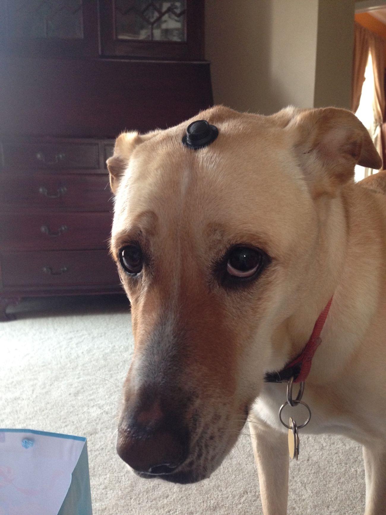 Dog Funny Mister Funny Dog