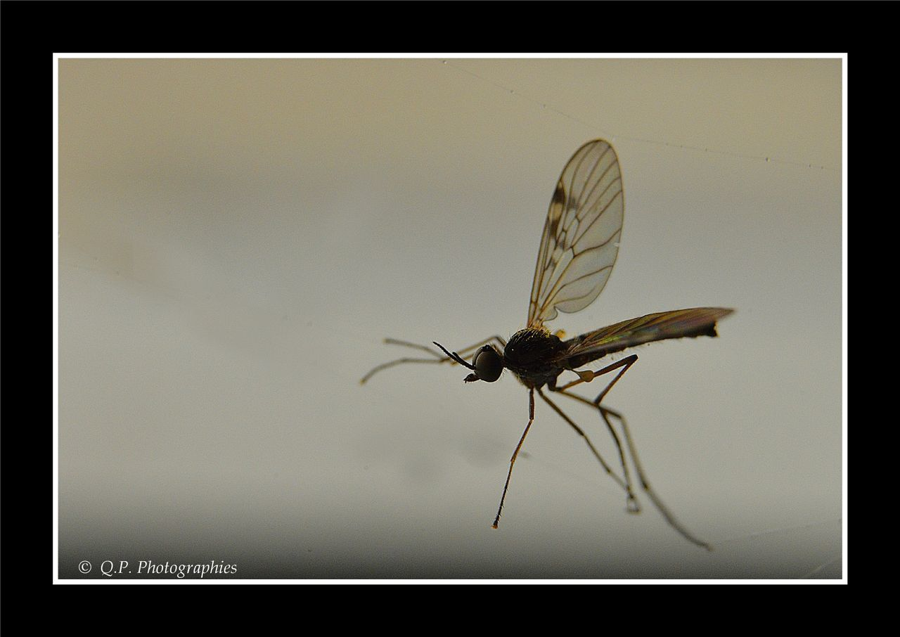 insect, animal themes, one animal, animals in the wild, close-up, no people, full length, day, outdoors, nature