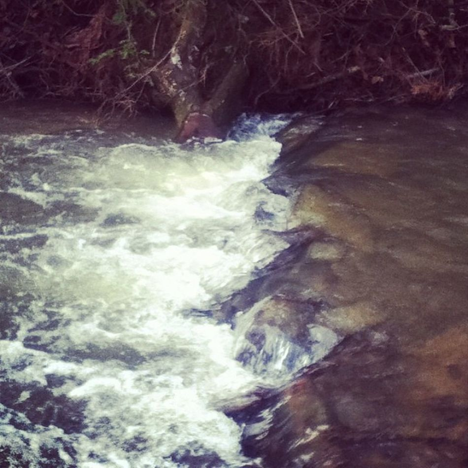 Water Moving Water Stream Creek River Coursing Bubbling Smooth Nature Outdoors