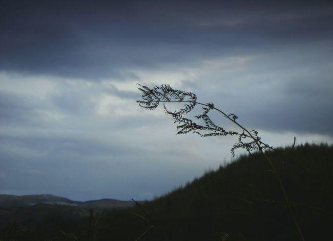 \... Fern Gloom Random Hills Gloomy Mood Wales Nature Wind Clouds папоротник облака