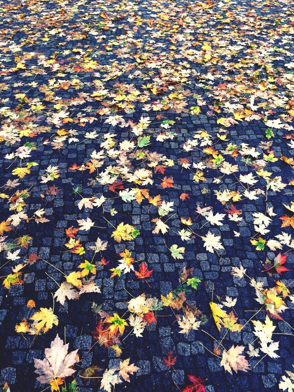 Autumn Autumn Leaves Berlin