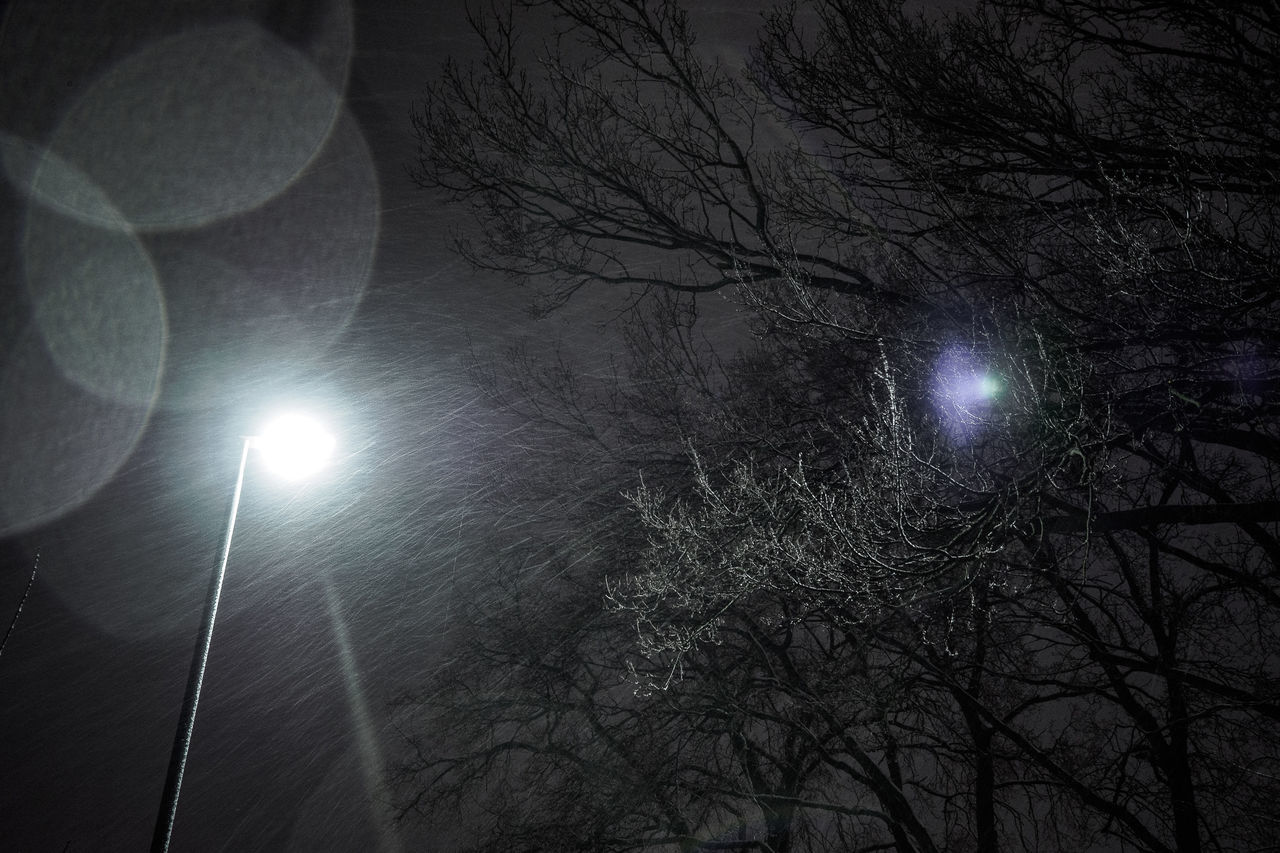 from the middle of the night Beauty In Nature Branch Cold Temperature Electricity  Illuminated Lens Flare Lighting Equipment Lights Low Angle View Nature Night Nightphotography No People Outdoors Sky Snow Snowing Tree Winter Winter