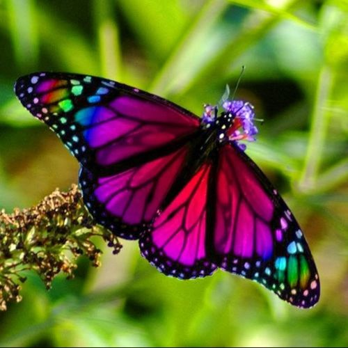 Betterfly Colourful Colours Gods Creation Check This Out