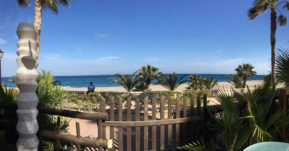 Sea Palm Tree Beach Nature Vacations Tourist Resort Day Nature Españoles Y Sus Fotos España🇪🇸 Eos750d📷 Marcolopezalonso MojacarEsVida