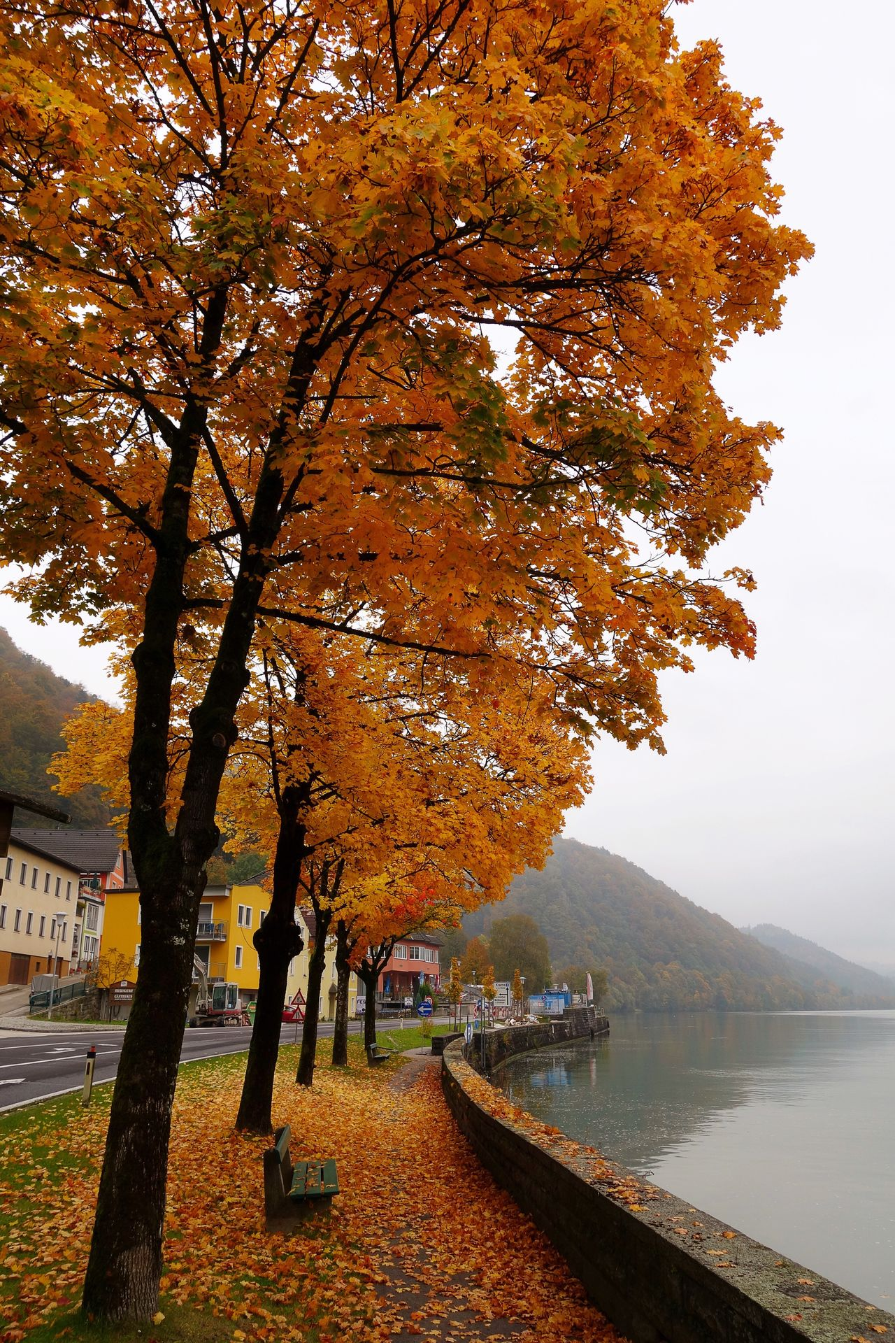 Tree Autumn Nature Beauty In Nature Scenics Change Water Tranquility Tranquil Scene Outdoors Leaf Travel Destinations River Danube Danube River Orange Leaves Orange Color Fall Fall Beauty Fall Colors Fall Leaves Austria Austria ❤ Wachau Peaceful